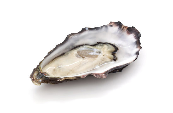 rsz_oyster-hi-res__72926140543159512801280