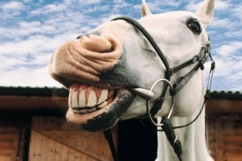 rsz_1animal-expression-goofy-farmyard-animals-goofy-horse-pictures-smiling-horse-60410